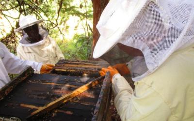 Jacana's Beekeeping Program, Chipata, Zambia